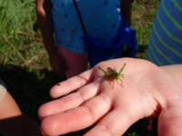 Homeschool Days, Fall 2019: Insects