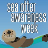 Sea Otter Awareness Week