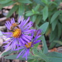 EcoReps Lunch & Learn: Native Plants
