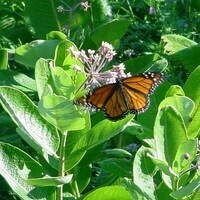 Save the planet...save the pollinators: Bees, Butterflies, & Insects
