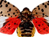 Pathway to Action: IPM Invasive Species Resources