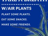 Take a Breath w/Air Plants