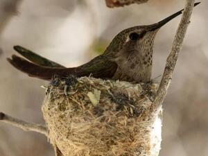 Birding Walk-About