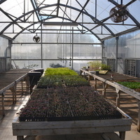 Organic Seedling Production Field Day