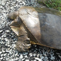 Shell Out and Talk About Turtles