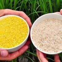 Science+Art+Design Sustainable Nutrition: GMOs