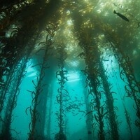 Science Sunday—Kelp Forest Resiliency: Life after Sea Urchin Grazing