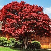 Tree Selection & Maintenance
