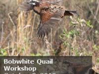 Bobwhite Quail Workshop