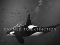 """""""Damned to Extinction"""""""