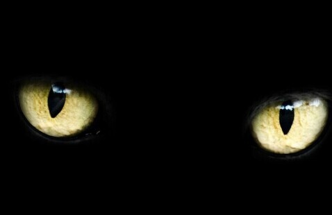 Friday the 13th: Cat Headbands