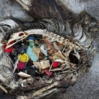 CRITICAL MASS INAUGURAL LECTURE: PLASTIC'S TIPPING POINT