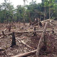Governing the Rainforest: The Life and Death of Sustainable Development in Amazonia