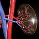 Renal Grand Rounds:  Renal Pathology
