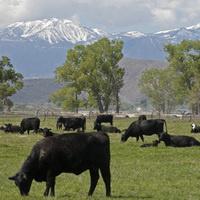 Farm & Livestock Theft Workshop