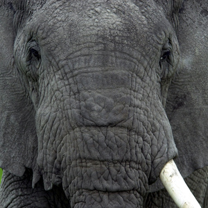 Wildlife Conservation, Anti-Poaching and Illegal Wildlife Trafficking in the Democratic Republic of Congo