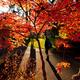 Fall at PLU