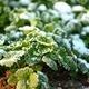 Prepping Your Garden for a Long Winter's Nap