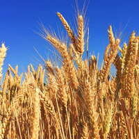 Whole Grain Month