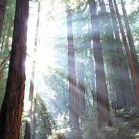 Raider Wilderness Experience - Redwood Exploration