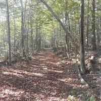 Take a Hike Thursday