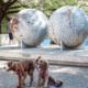 Landmarks Dog Walk