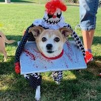 2nd Annual Five Knolls Halloween Dog Costume Contest