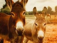 Equine Seminar - Donkeys are Different