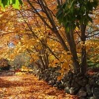 Fall Arboretum Walk