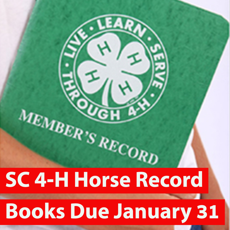 4-H Horse Project State Record Book Contest Deadline