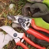 Learn Proper Pruning Techniques for Trees and Shrubs