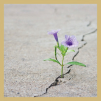 Bouncing Back: Developing a Culture of Resiliency