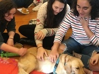 """Yappy Hour with Therapy Dogs"" - Alcohol Awareness Month Kick-Off Event"