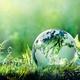 Contemporary Environmental Crisis: An Islamic Perspective