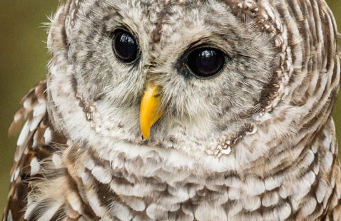 Owl Prowl at Rice Creek Field Station