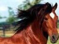 Equine Pasture Management Workshop