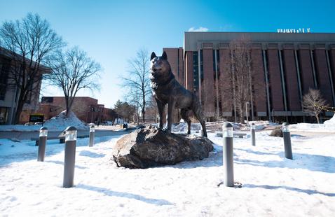 Husky Statue in the winter