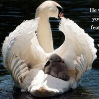 Verse of the Day - Psalm 91:4