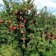 Fall Fun - Rock Hill Orchard