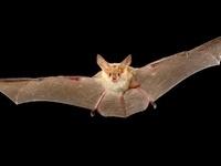Be a Bat Hero, Super Hero Bat Walk