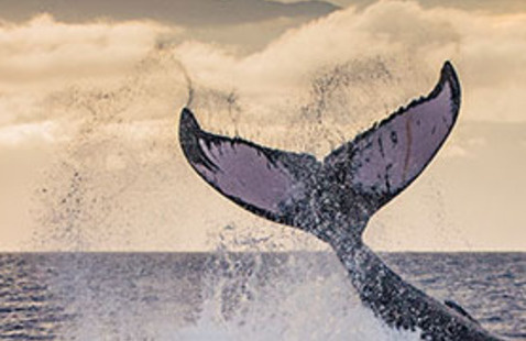 Symposium: Humpback Whales and Their Extraordinary Mystery of Song