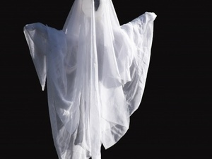 Pitt-Greensburg: Spooky Genitalia