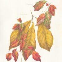 ANCARROW'S LIST: NATIVE PLANTS AT THE RIVER'S EDGE