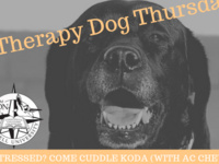 Therapy Dog Thursday!