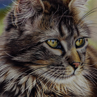 Majestic Cat in Colored Pencil on Pastelmat
