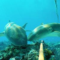 Saving Our World's Sharks