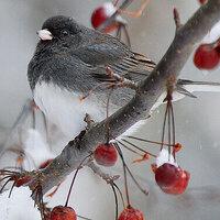 Winter Birding