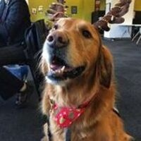 Therapy Dogs in the Library