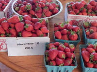 Marvin Pritts – lecture on the sustainability of strawberries !