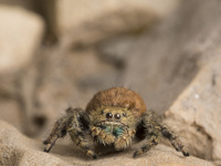 Arachnophilia: A Passion for Spiders